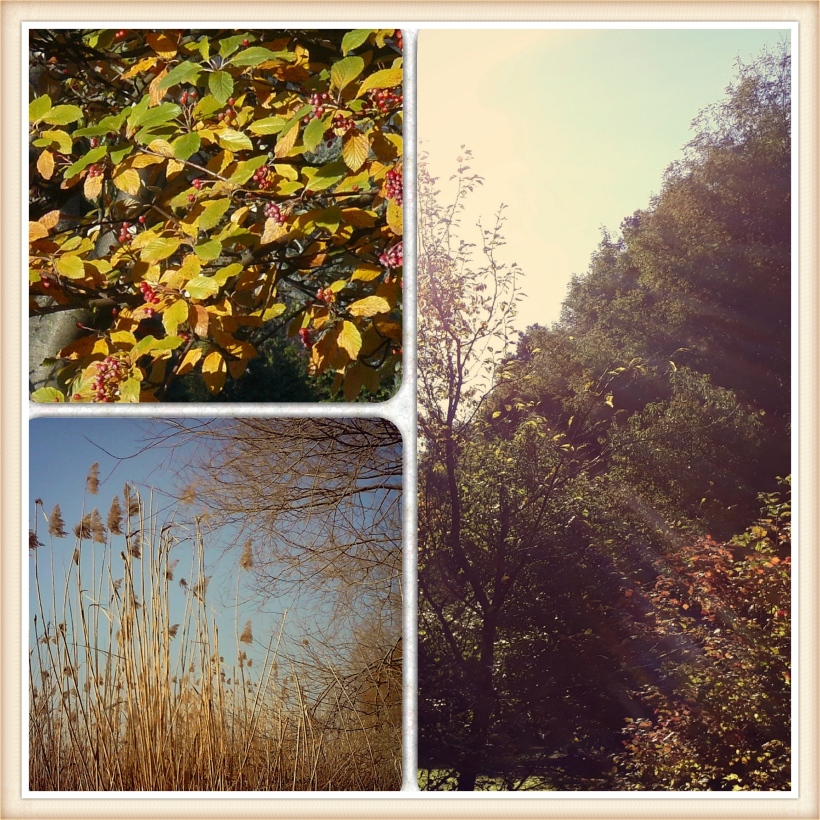 Collage_Herbst