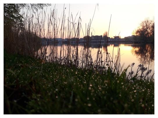 Morgentau