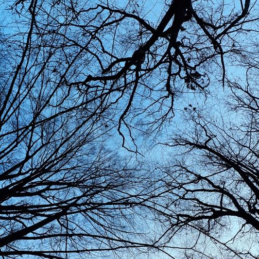 Baumkronen_Winter